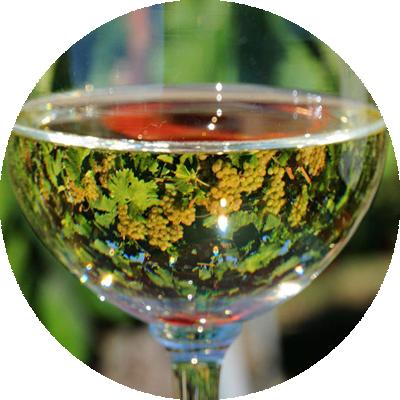 vini biologici Vinonesto